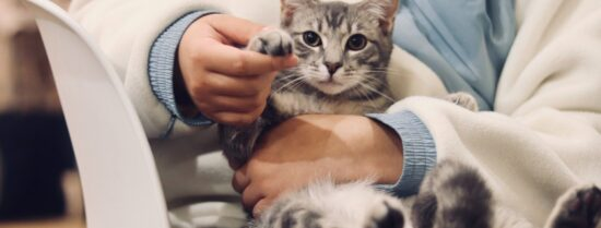 Top 10 Veterinarian Websites That Give Paws For Thought